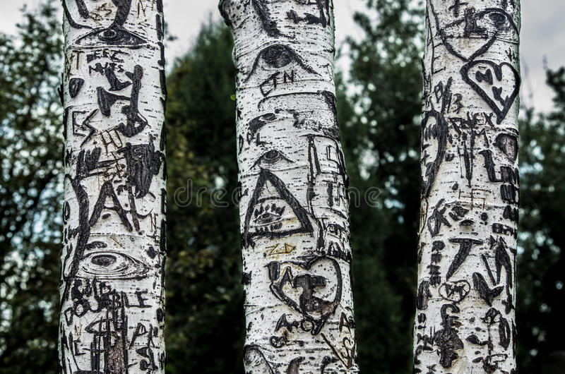 Three birch trees. With miscellaneous graffiti engraved into their bark. Leafy trees and sky are visible behind. High contrast royalty free stock photography