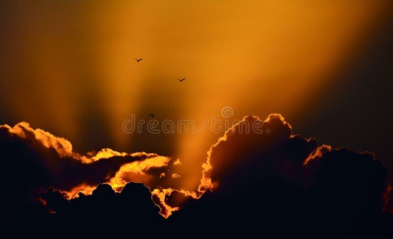 Three birds. In a wonderful sunset sky stock photo
