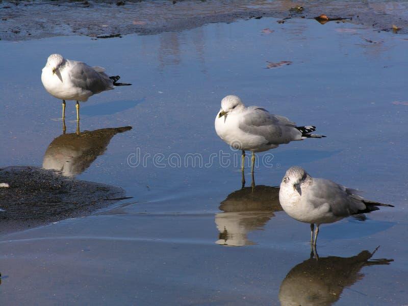 Three Birds Free Stock Photos