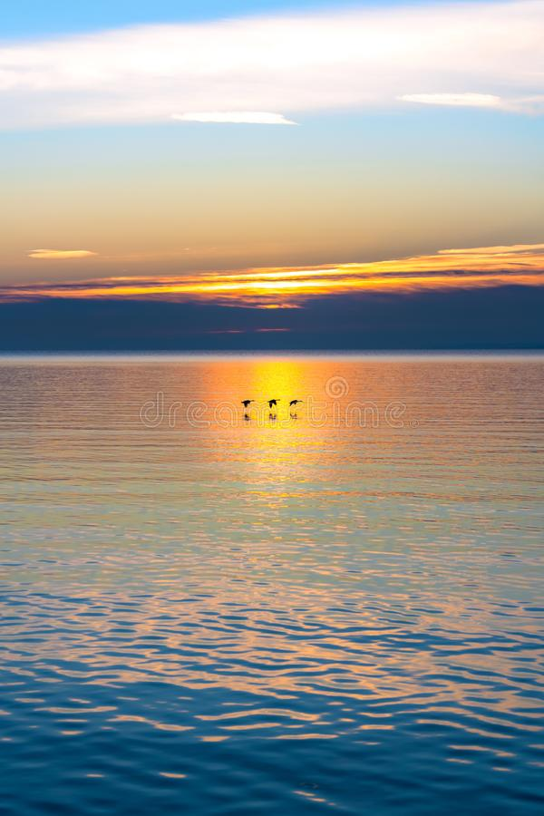 Three birds flying low over tranquil waters aglow with colors of royalty free stock images