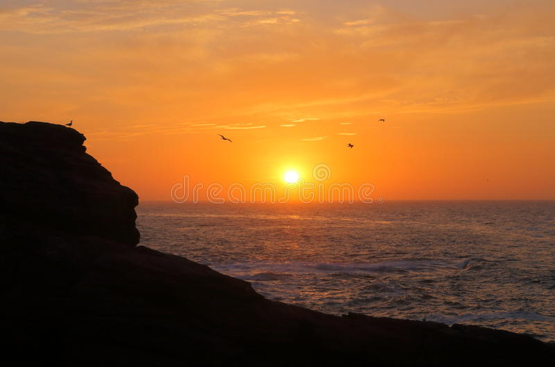 Three birds at Sunrise stock photo