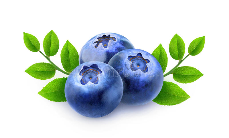 Three blueberries with branches and leaves stock photos