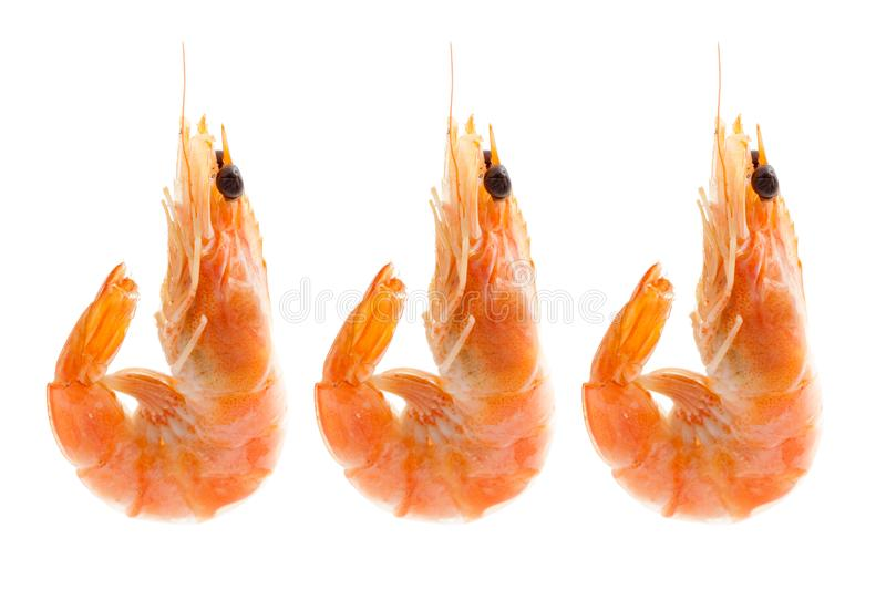 Three boiled Shrimps isolated stock image
