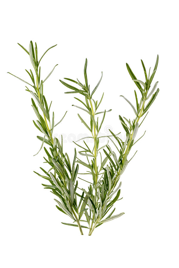 Three branches of rosemary. Isolated over white stock images
