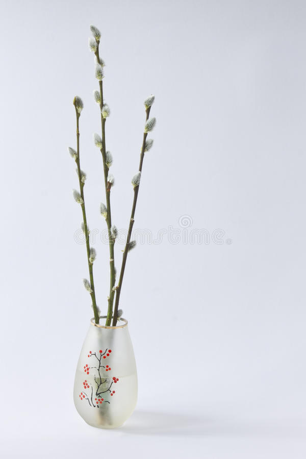 Three branches of willow with furry buds in a small vase on a li royalty free stock images