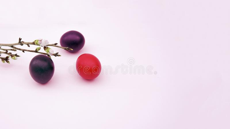 Three bright colored easter eggs, cherry branch stock photos