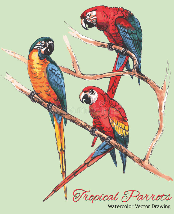 Three Bright Macaw Parrots on a Branch (Watercolor Vector Drawing) royalty free illustration