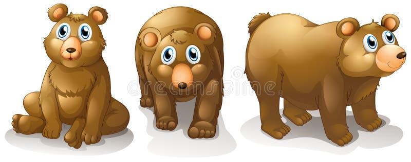 Three brown bears stock illustration