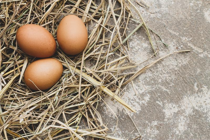 Three brown eggs on straw stock image