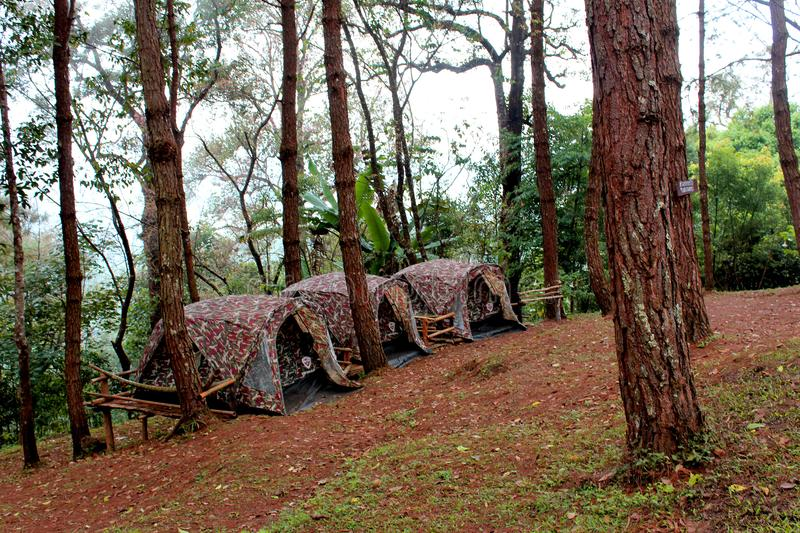 Three Brown Tents Beside Green Leaf Trees stock photography