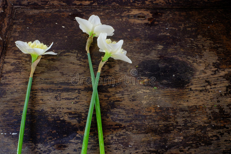 Three Bunch of white narcissus on wooden table. Three Bunch of white narcissus on a wooden table royalty free stock image