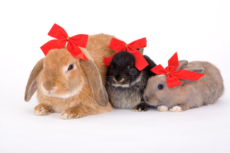 Three Bunny Wearing A Red Bow Stock Images