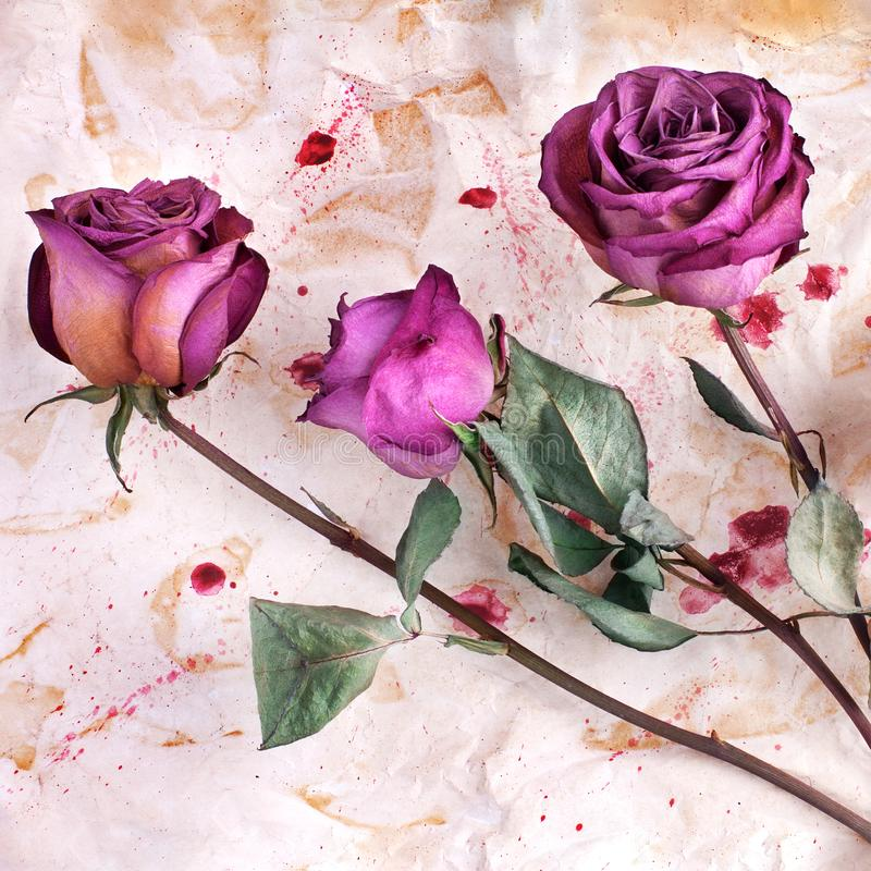 Three burgundy rose flowers on painted crumpled aged paper background close up, holiday invitation or greeting card design stock photo