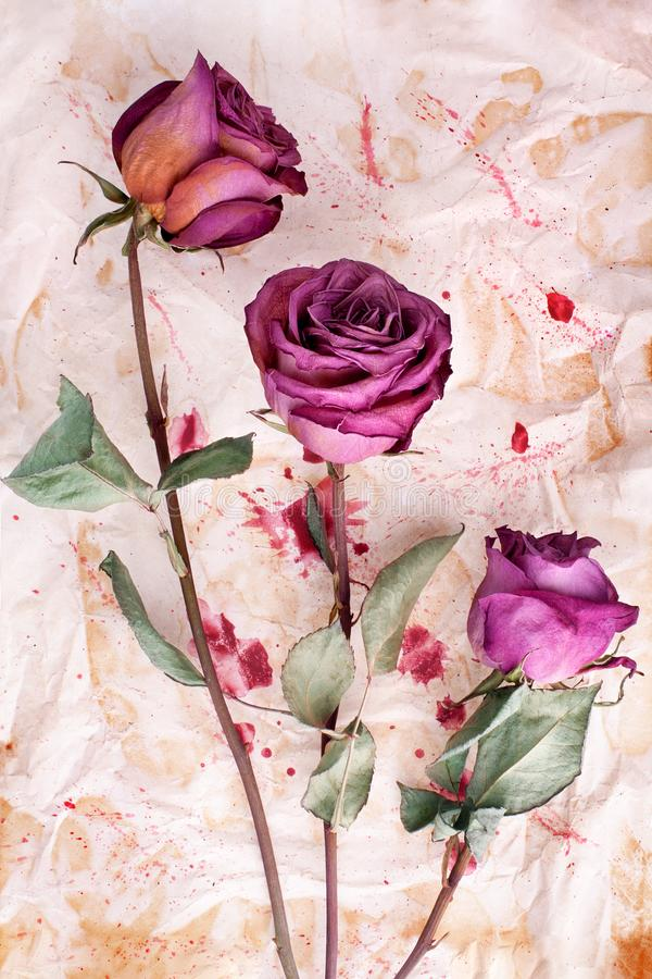 Three burgundy rose flowers on painted crumpled aged paper background close up, holiday invitation or greeting card design royalty free stock photo