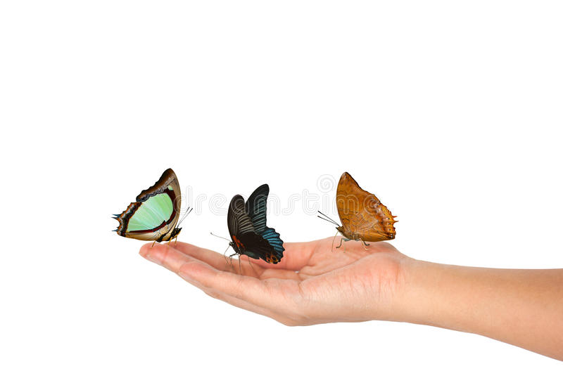 Three butterfly on female Hand isolated royalty free stock photography