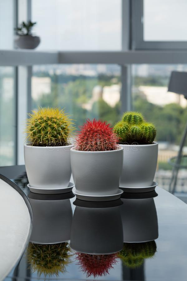 Three Cactus On The Table. House Plants In The Room. Modern Interior ...