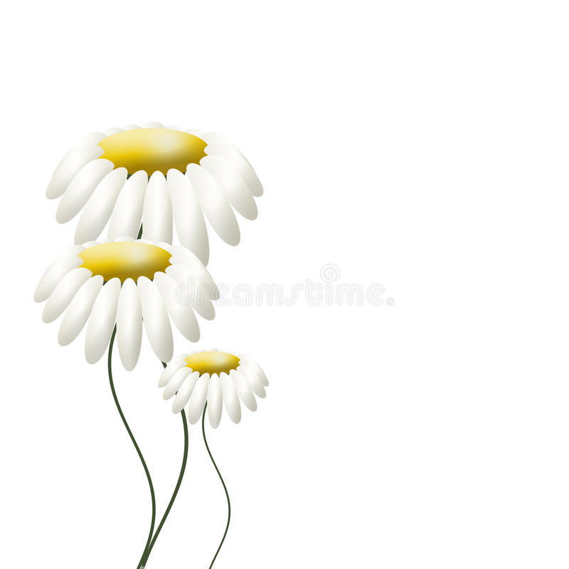 Download Three camomiles on white stock illustration. Image of abstract - 17316503