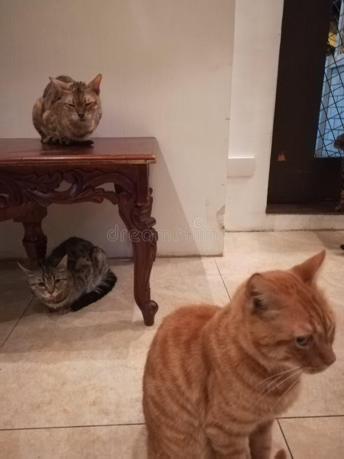 Three cat friends stock photos