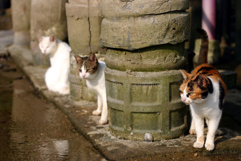 Download Three cats stock image. Image of cats, kitty, cute, animal - 300403