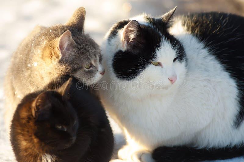 Three cats friends stock photo