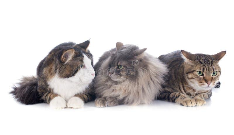 Three cats stock photos