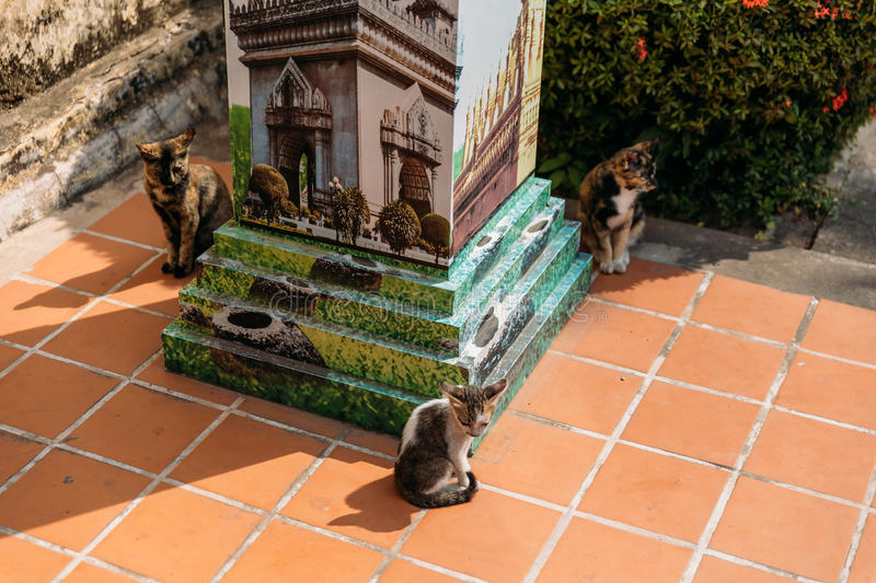 Three Cats in Laos Temple at Vientiane, Laos.  royalty free stock photos