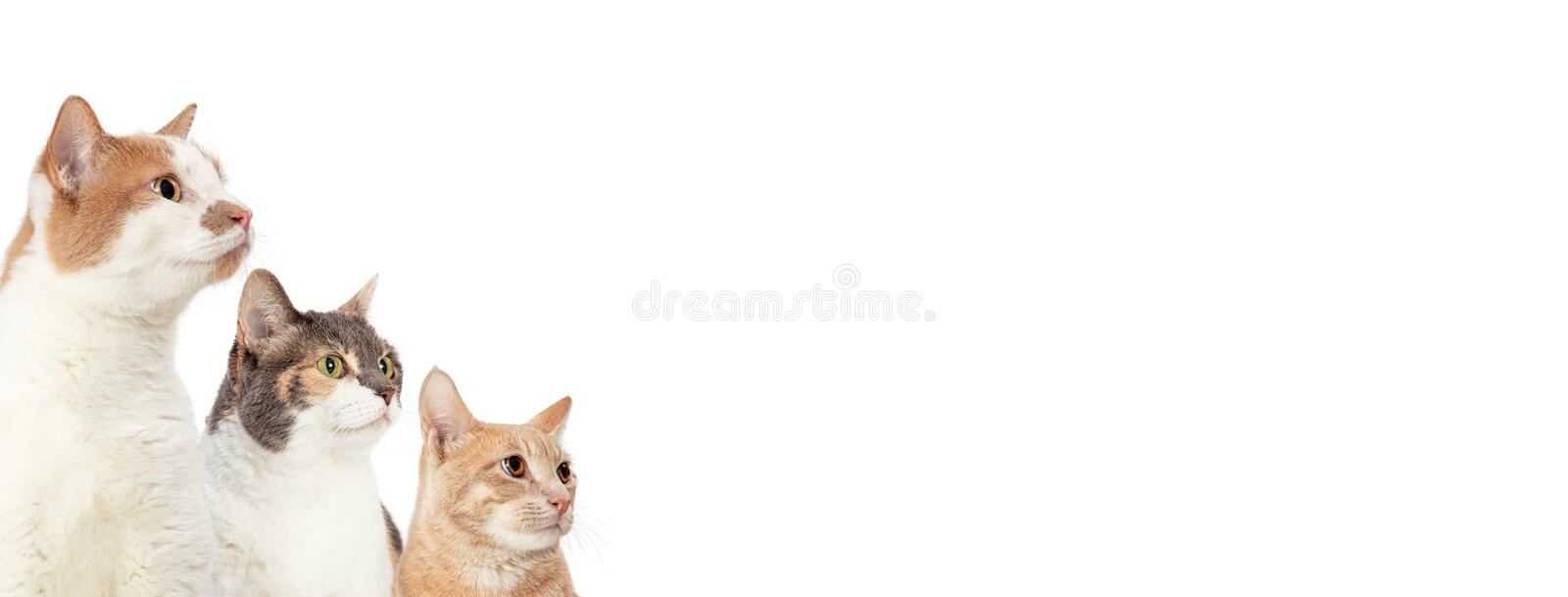 Three Cats Looking Into Blank White Web Banner royalty free stock photos