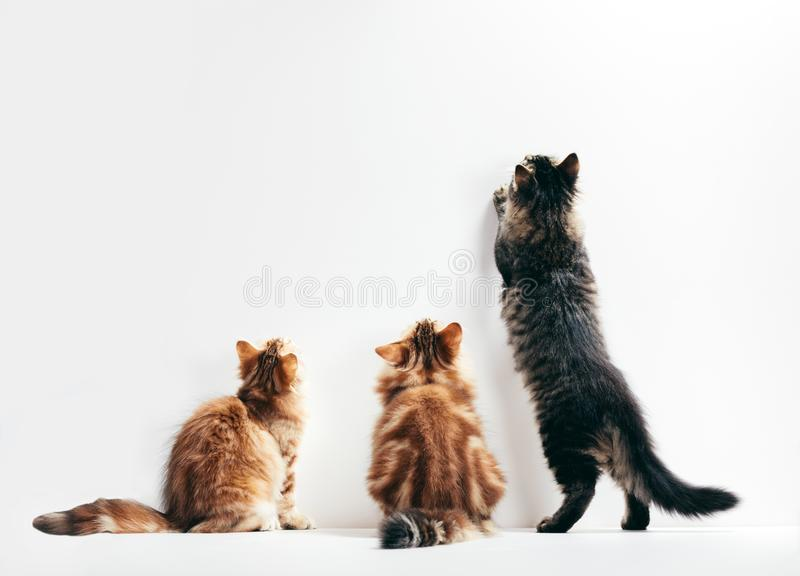 Three cats looking up the wall. Young kittens play time stock photography