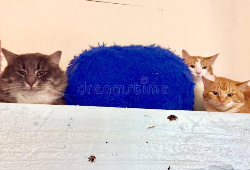 3 cats on a shelf stock photo