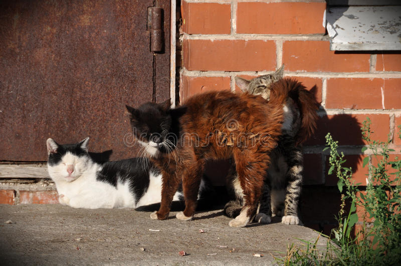 Three cats sit on the porch. Outside the house stock photos