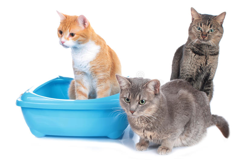 Three cats sitting beside cat litter box. Isolated stock photos