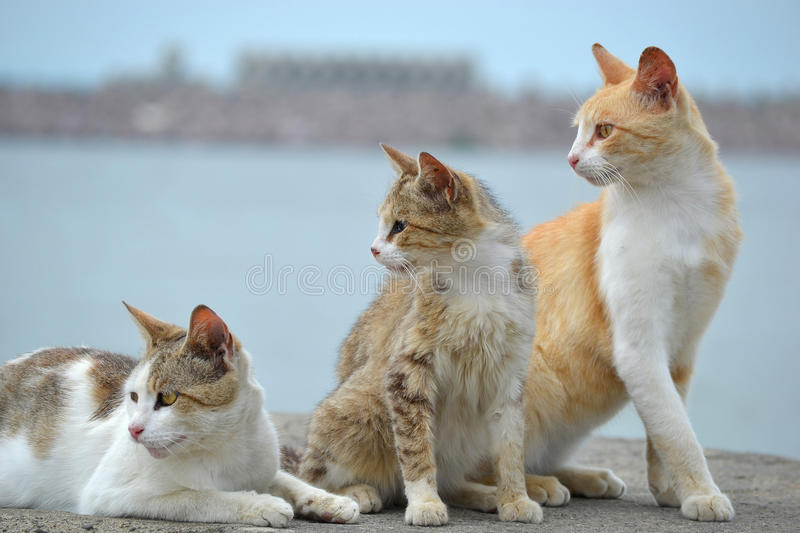 Three cats watching stock photography