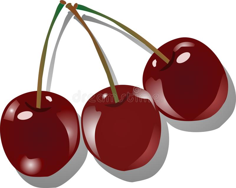 Download Three cherries stock vector. Image of luscious, design - 9811038