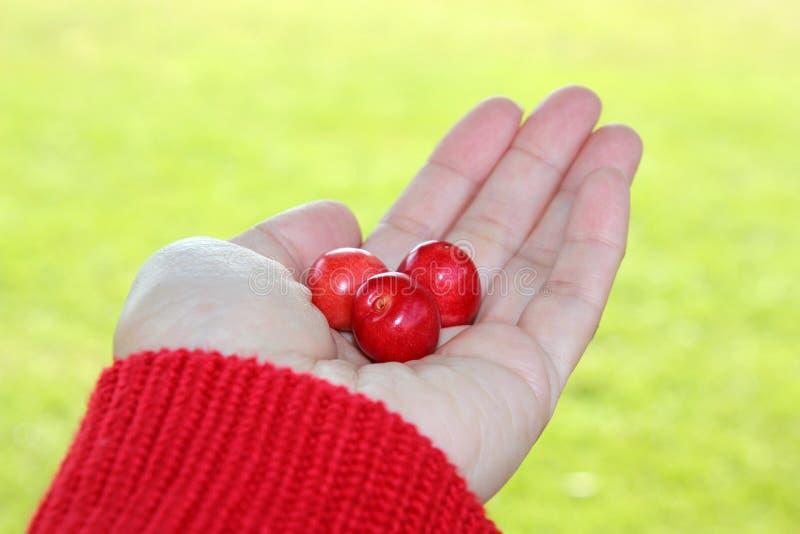 Three cherries in hand stock photos