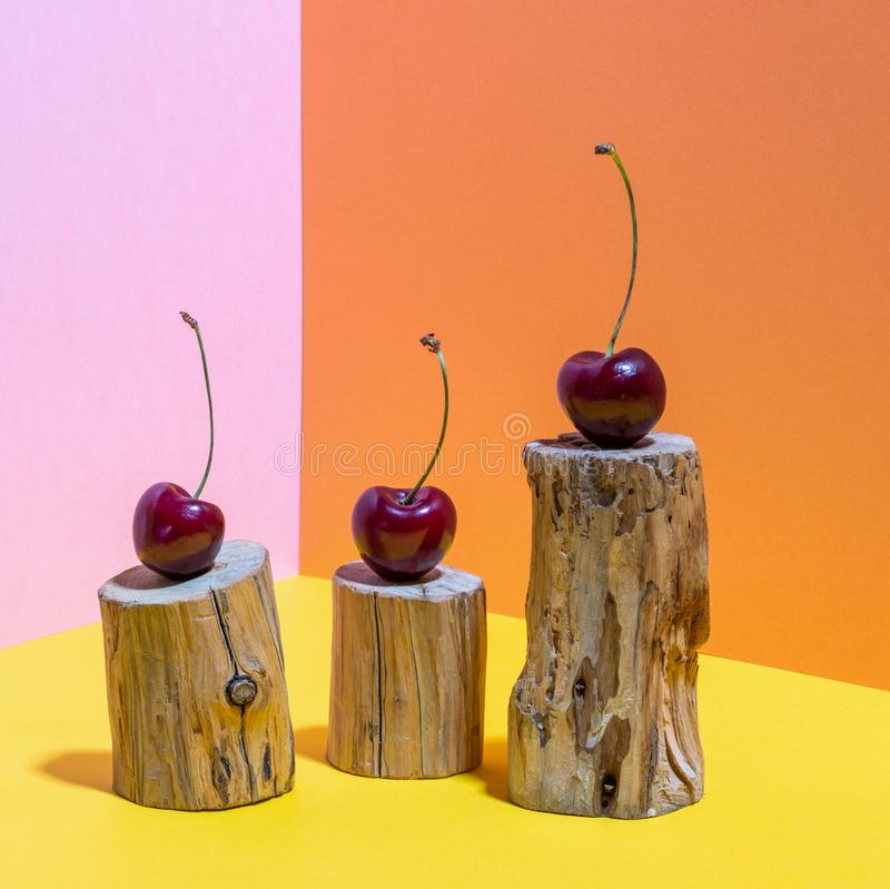 Three cherries on small wooden stumps eaten by bark beetle on bright pink, yellow and orange backdrop. Pop Art.  Minimal colorful still life. Shot with hard royalty free stock image