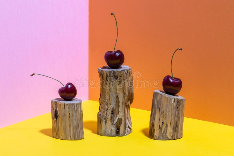 Three cherries on wooden stumps on bright pink, yellow and orange background. Three cherries on little wooden stumps eaten by bark beetle on bright pink, yellow royalty free stock photo
