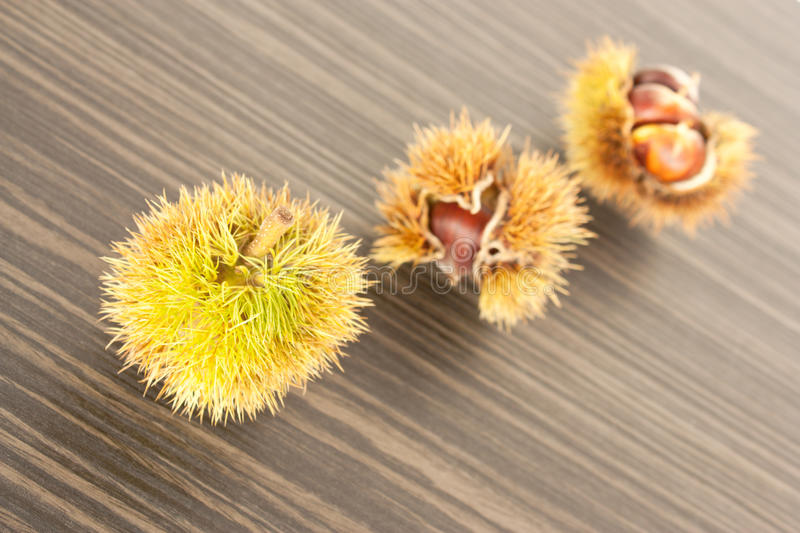 Download Three chestnuts. stock image. Image of closeup, isolated - 16909687