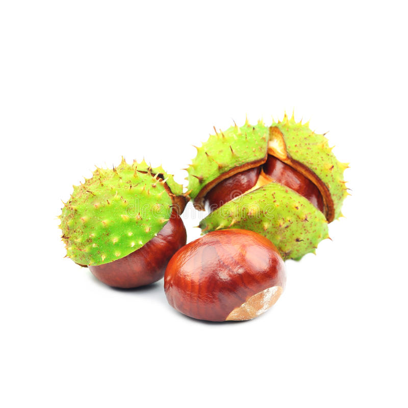 Download Three chestnuts stock photo. Image of barb, rind, isolated - 33948202