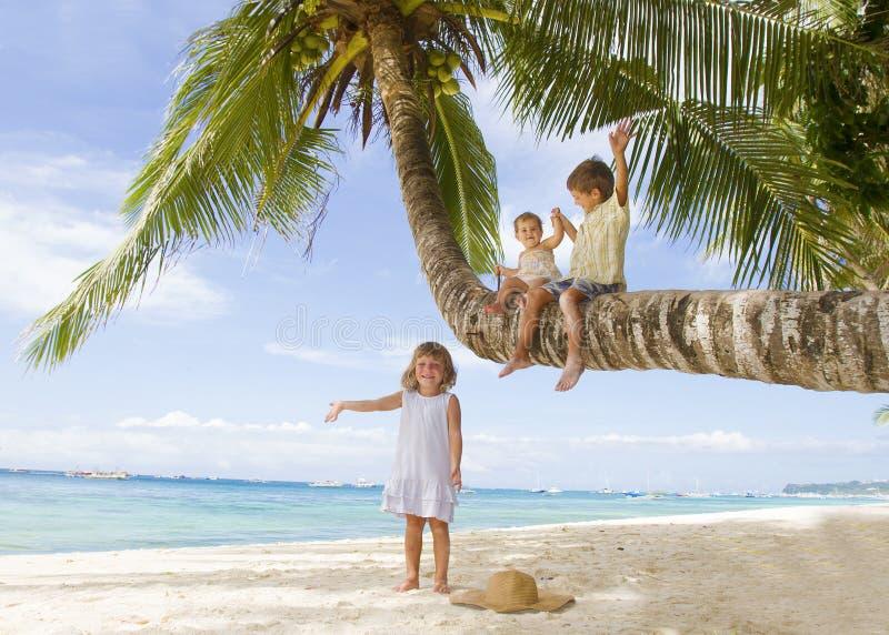 Three Children On Palm Tree Stock Image
