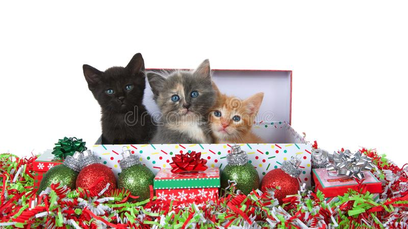 Three christmas kittens in a box isolated royalty free stock photography