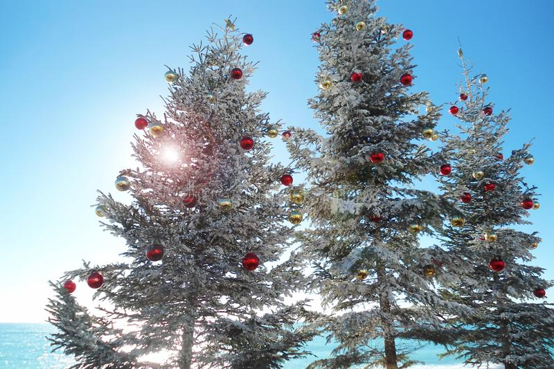 Three Christmas trees on the waterfront of the warm sea. Bright sunlight making its way through dense spruce branches; anticipation of the welcome festive stock images