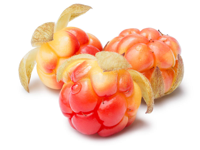 Three cloudberries (Rubus Chamaemorus). Clipping paths, berries and shadow separated, infinite depth of field royalty free stock image