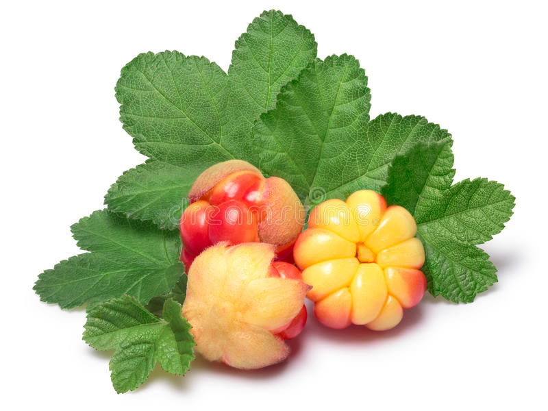Three cloudberries (Rubus Chamaemorus) with leaves. Clipping paths, berries and shadow separated, infinite depth of field stock photo