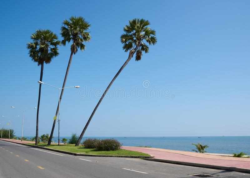 Three coconut palm trees on blue sky background royalty free stock photo
