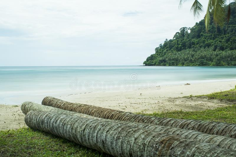Three coconuts in front of the beach. There are sea and hills in stock photography