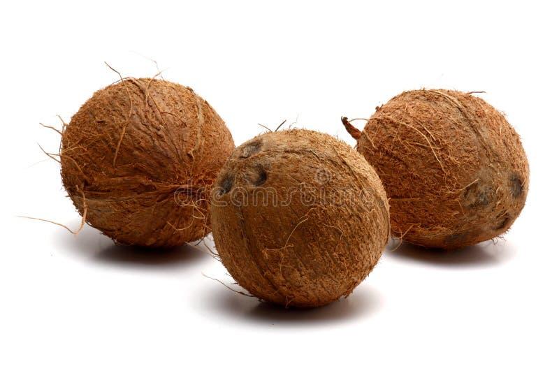 Three Coconuts Stock Photos