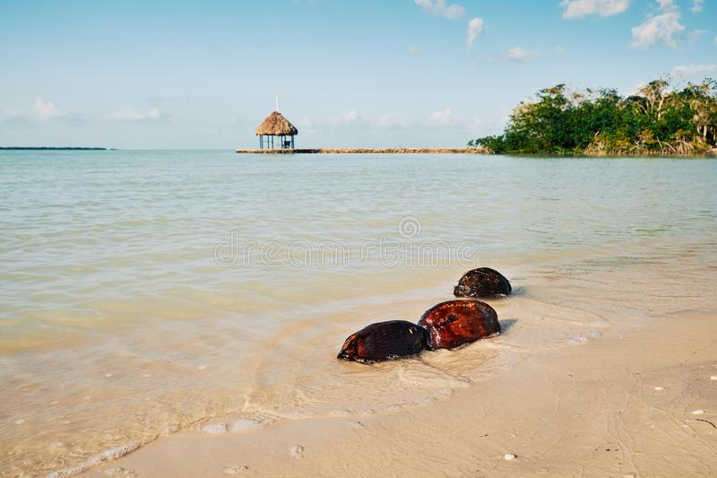 Three Coconuts in the Water royalty free stock image