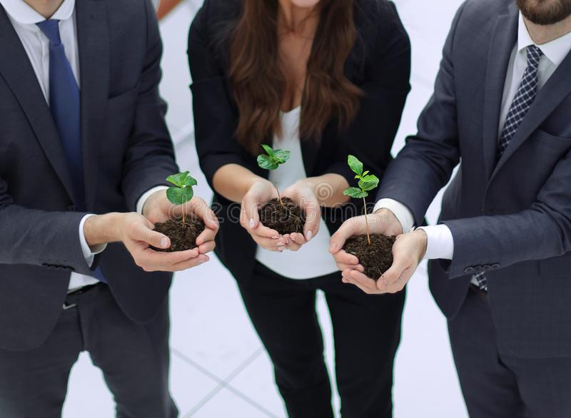 Three colleagues hold young shoots stock photo