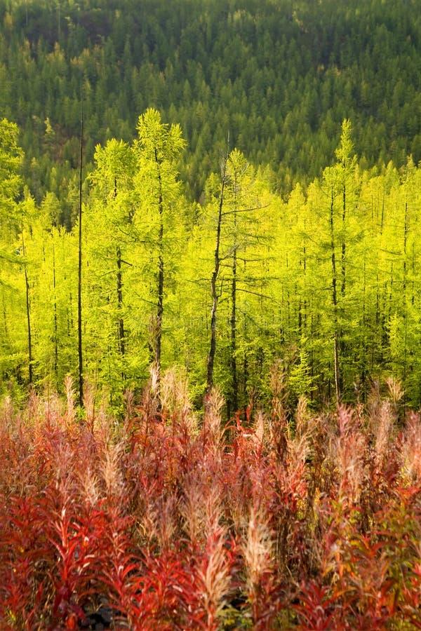 Three color of autumn nature stock photo