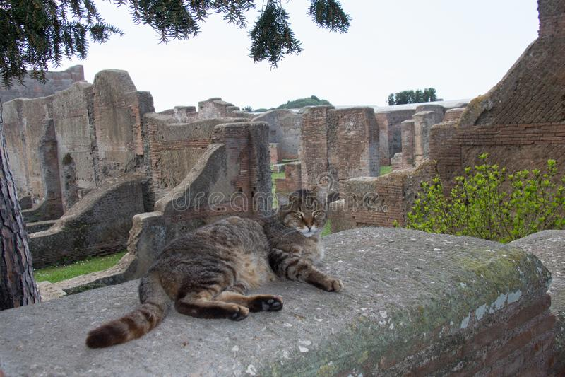 Three colored cat and ruins and Ostia Antica on background royalty free stock images